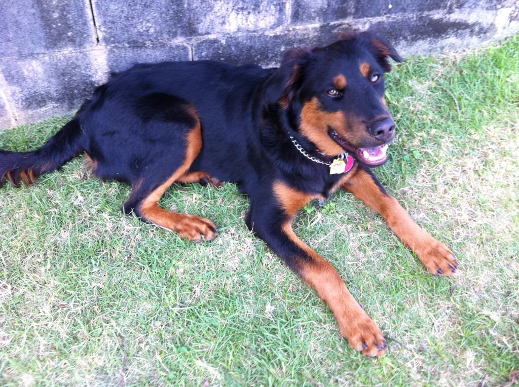 Peach's dog Hendo